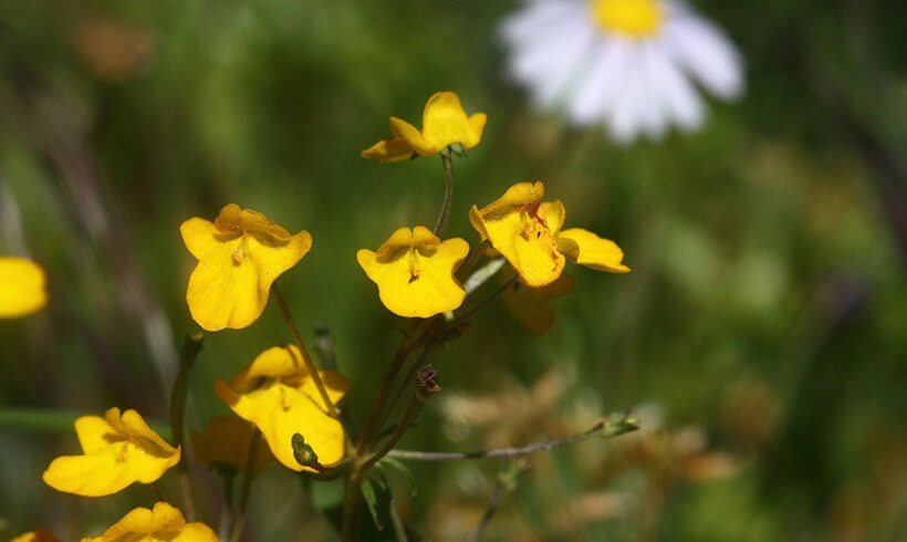 First Renosterveld Land Purchase in the Overberg