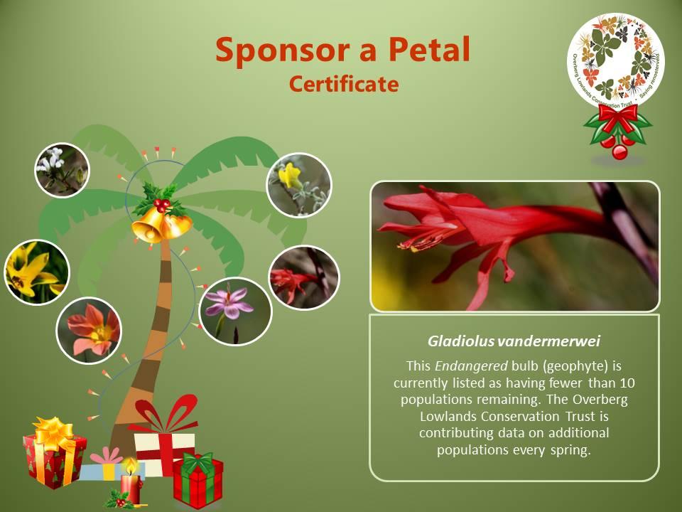 Certificate example Sponsor a Petal Xmas campaign