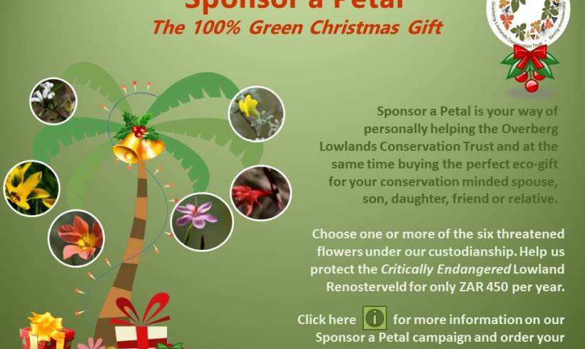 The 100% Green Christmas Gift