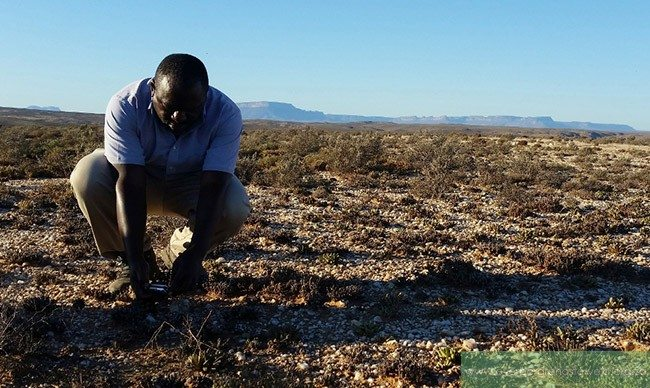 Renosterveld Research & Student Update