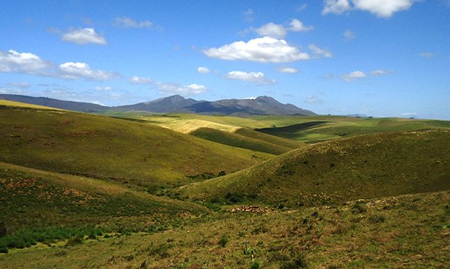 Characterising native palatable legume and non-legume species in the  rangelands of the Overberg