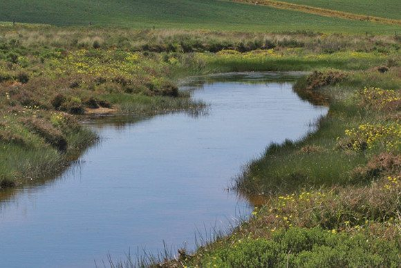 Restoring the Overberg's Watercourses: Beginnings of a New Project