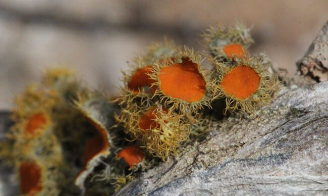 Life in miniature: Exploring the secret world of lichens at  Haarwegskloof Renosterveld Reserve
