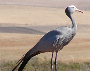 Joining forces: A new partnership with the Overberg Crane Group