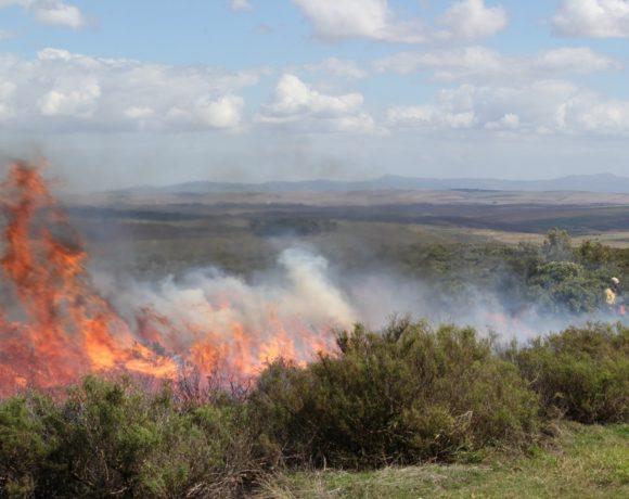 An Ecological Control Burn at Haarwegskloof Renosterveld Reserve