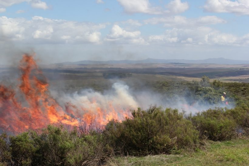 An Ecological Control Burn at Haarwegskloof Renosterveld Reserve
