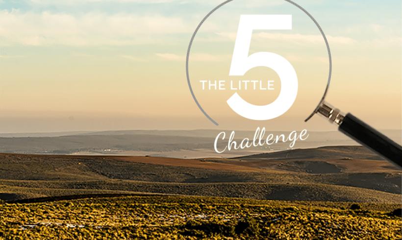 Little 5 Challenge