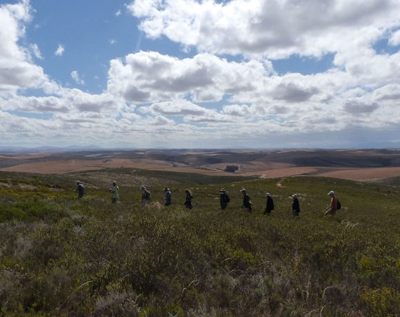 Renosterveld Restoration Workshop at  Bontebok NP: A Report