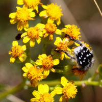 Pollination: Spring in the Overberg