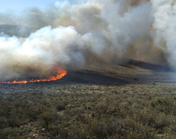Ecological burns in the 2018 fire season