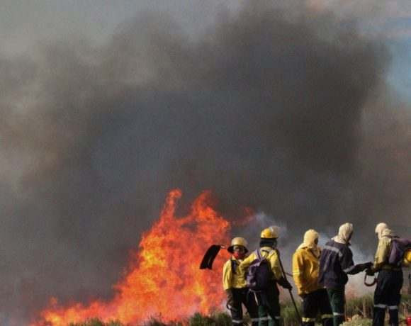 Ecological burns are a crucial part of a management plan