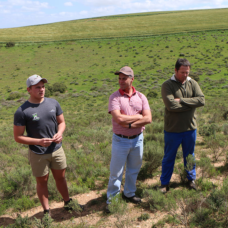 Farming tip: When Renosterveld thrives…