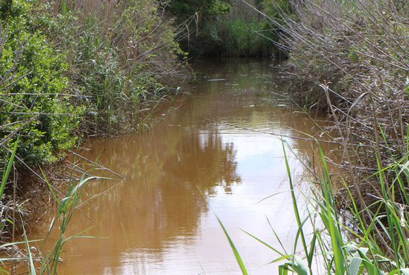 Renosterveld watercourses: Who knew THIS would happen…