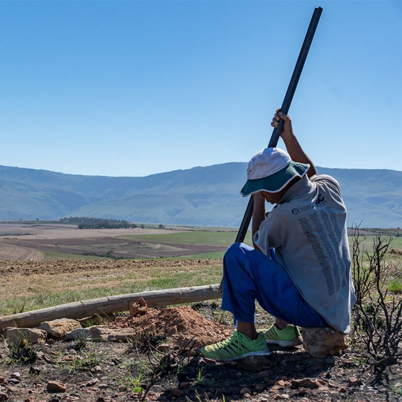Three years later – here's how watercourses helped protect Renosterveld