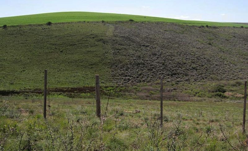 3 tips to manage Renosterveld grazing post-fire