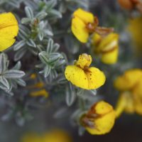 The 7 best places to see Renosterveld in spring