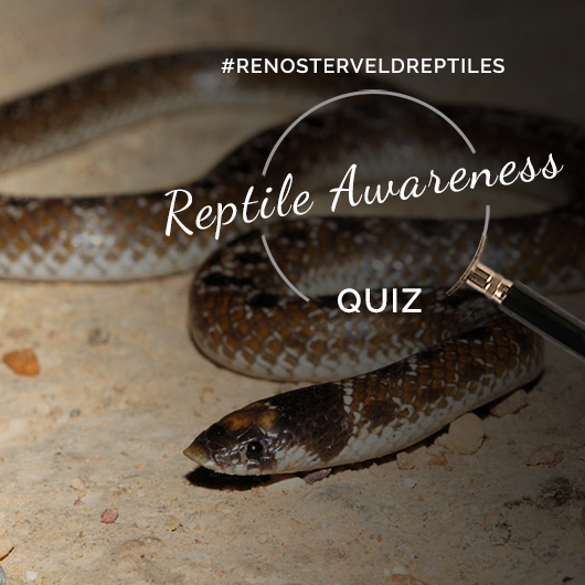 Quiz: A snake encounter to AVOID