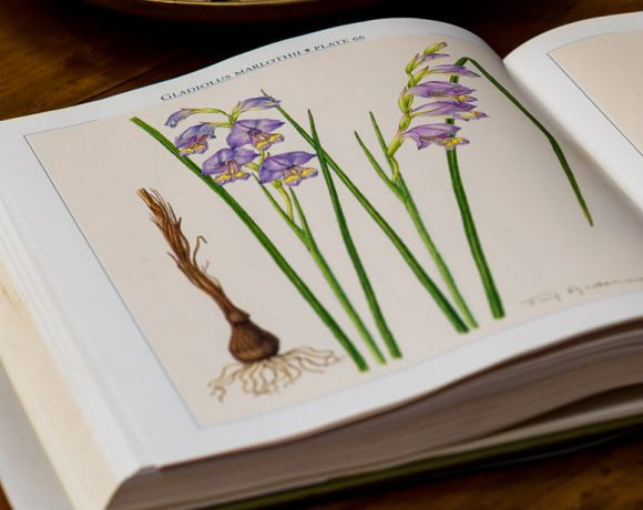 Volunteers needed for the creation of the first Renosterveld Herbarium