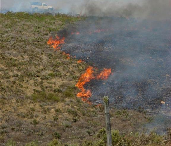 Blooming beautiful: The importance of fire in Renosterveld