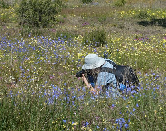 Renosterveld, Rhebuck, remarkable rivers – and a dose of reality